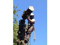 Tree Surgery - Tree Surgeon - Tree Care - Chris Wheatley Tree Surgery