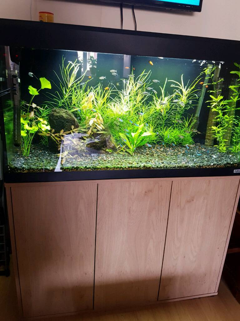 Aquarium fish tank for sale in london - Fish Tank For Sale Co2 System
