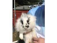 Bunnys for sale