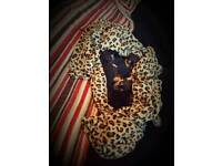 🐶 Beautiful pedigree chuihauhas pups 🐶
