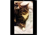 MISSING CAT!!!! REWARD OFFERED