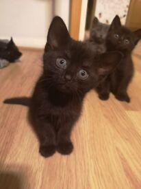 Lovely black kitten in good hands