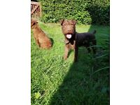 Patterdale for sale