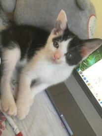 Gorgeous Kitten Looking For New Home