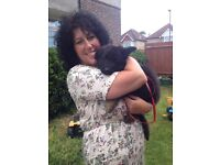 Doggy Dashers - Affordable dog walking, day care and home boarding service