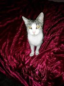 Female cat 2 & a half years old neutered & microchipped collection only