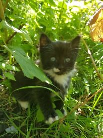 Lovely kitten's looking for a new home