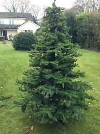 Artificial Christmas Tree 6ft 4'
