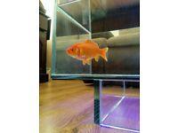 New aquarium fish tank coffee table