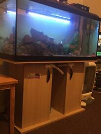 Fish tank for sale (BIG)