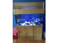 Marine aquarium, solid oak cabinet full setup