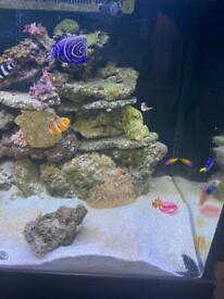 Marine fish tank 500l