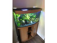 Aquarium and fish for sale