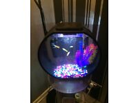 Full Tropical Fish Tank Set Up Biorb Style