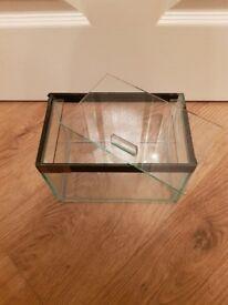Small Glass Vivarium by Custom Aquaria 20x13x13cm with accessories