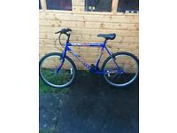 Adult mountain bike (maxima)