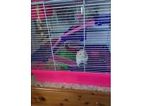 Hamster for free