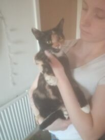 2 year old female cat for sale
