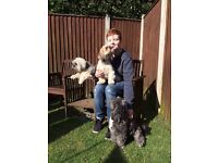 Experienced Dog Walker/ Pet Sitter (Great Yarmouth)