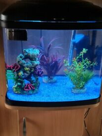 Fish Box X Tank and Stand