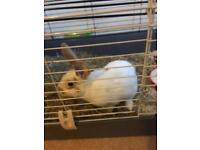 5 month rabbit looking for a forever home