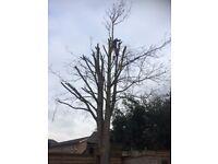 Jangle clearance and tree cutting