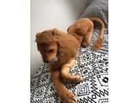 HUGE lion teddy! Perfect clean condition