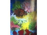 Swimming Fish Tank Light