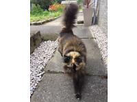 Cat found torphins , call for details