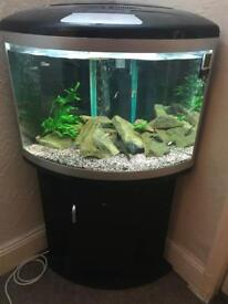 100 ltre fish tank and stand full set up