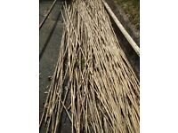 Garden cut bamboo canes for stakes etc, various lengths