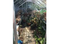 12ft x 8ft. Greenhouse