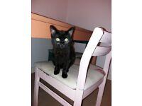 Home needed for Casper - 5 Month Kitten