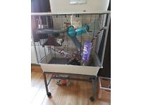 2 x Rats and cage