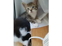 Adorable playful kittens need a loving home