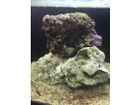 Marine reef Live rock for sale