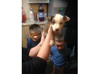 Stollie pups ready to be rehomed
