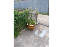 An assortment of plants in pots Job lot or will Sell individual at £15 each
