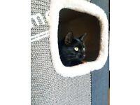 Cat tower/scratching barrel