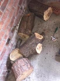 5 outsided dry wood logs ideal for fire burning need cut