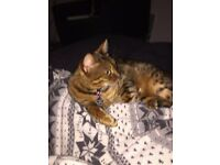 CAT SITTING SERVICES - Brighton Area - Have your cat looked after whilst you are away