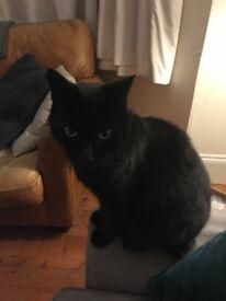 LOST BLACK CAT - CLAPHAM SOUTH