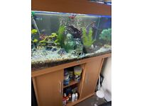 180L Jewel Fish Tank With Fish And Gravel