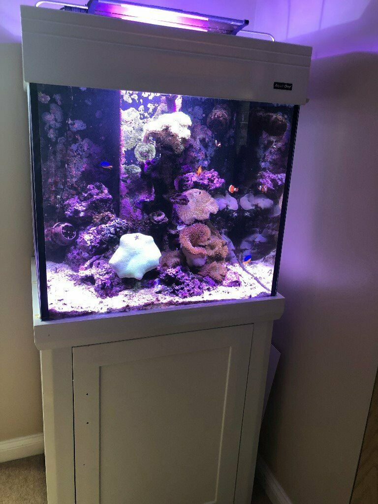 Marine Fish Aquarium for sale - complete set-up | in ...