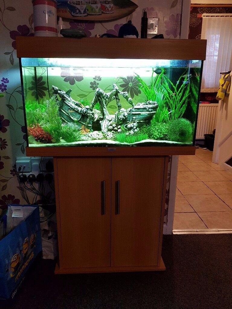 juwel rio 125 aquarium and cabinet fish tank full set up with fish plants ship heater etc in. Black Bedroom Furniture Sets. Home Design Ideas