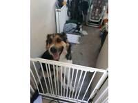 Dog for sale £100 ono