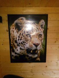 Large framed jaguar print (1 of 4)