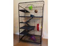 Gentleman Rat + Huge Cage + Travel Box + Food + Accessories