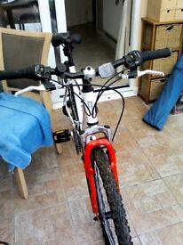 Adult men's mountain bike