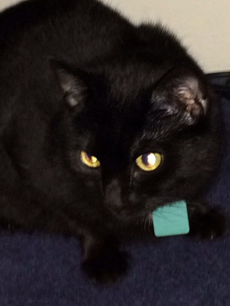 Lost 6 year old microchipped female cat